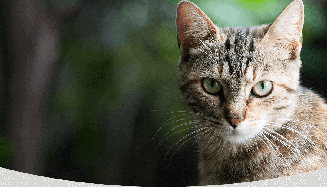 Pet Remedy: CBD and Fish Oil for Pet Health